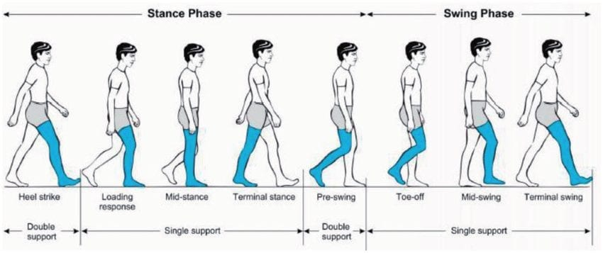Human-gait-cycle for bionic legs
