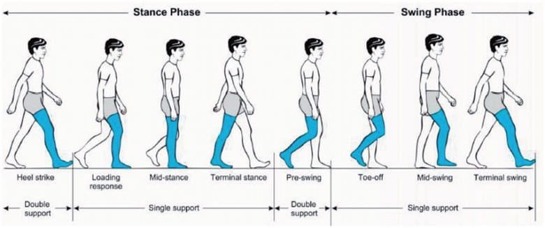 Human Gait Cycle for the Ossur Power Knee